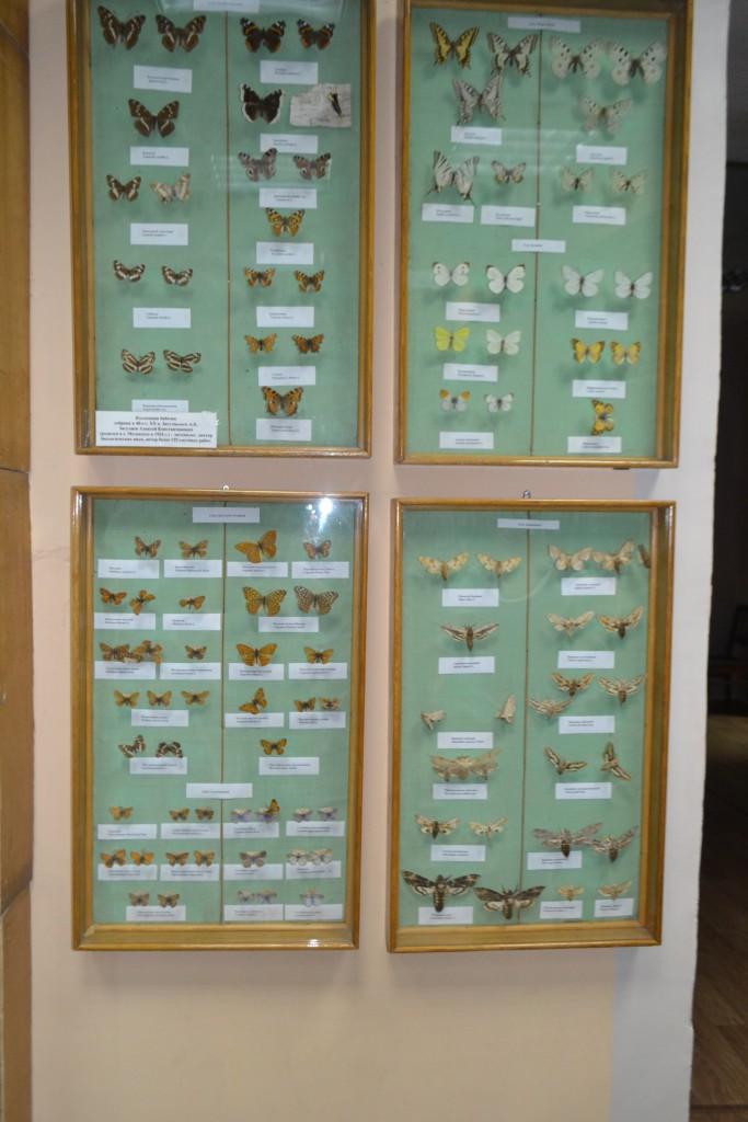 """""""Коллекция бабочек."""" Коллекция бабочек собрана в 40-е годы XX в. Загуляевым А.К. Загуляев Алексей Константинович (родился в г. Мелекессе в 1924 г.) -энтомолог, доктор биологических наук, автор более 135 научных работ."""