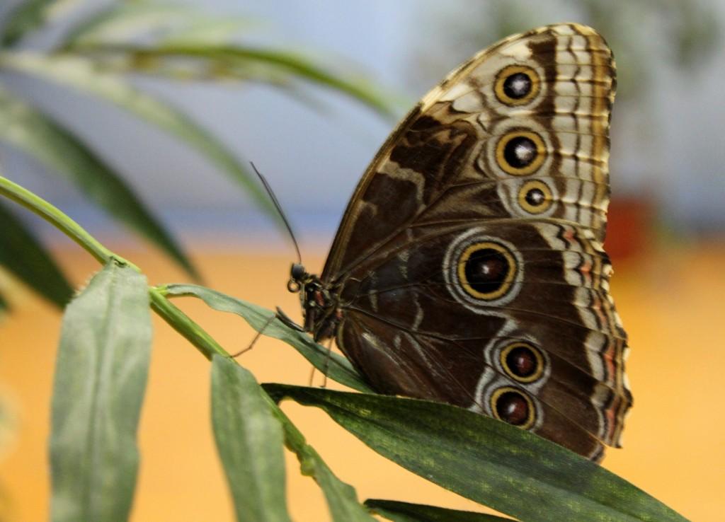 бабочки3