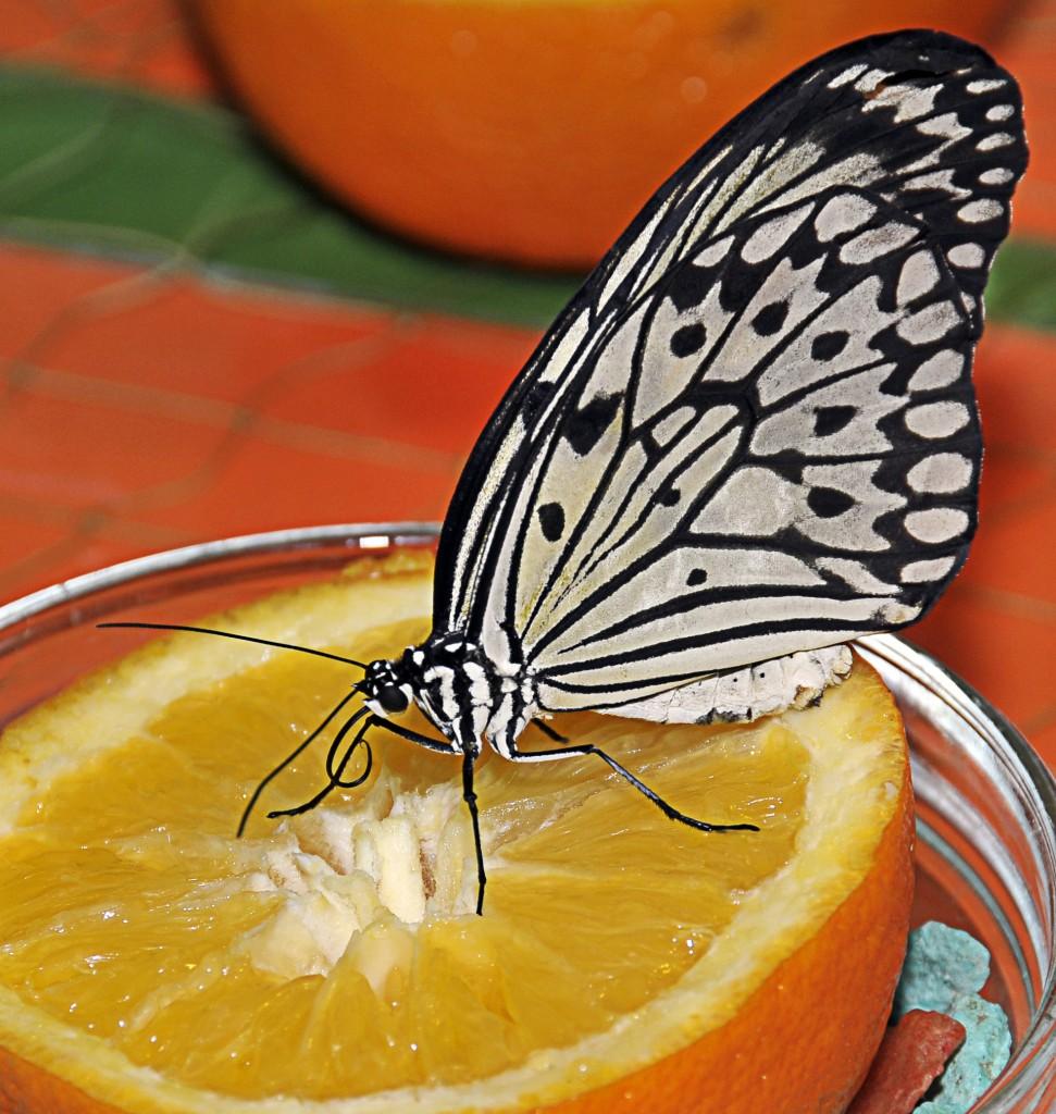 бабочки4